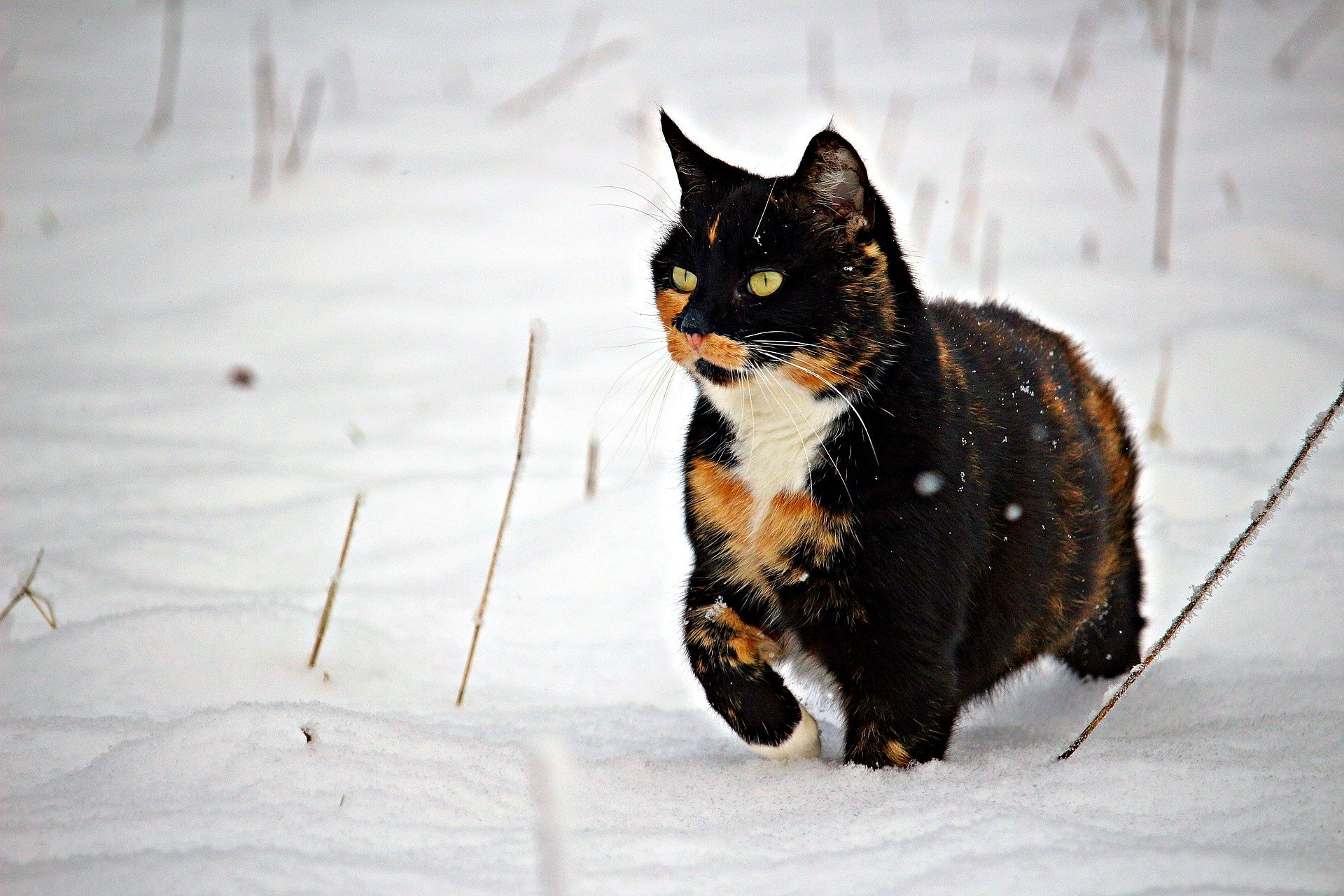 feral-cats-in-winter