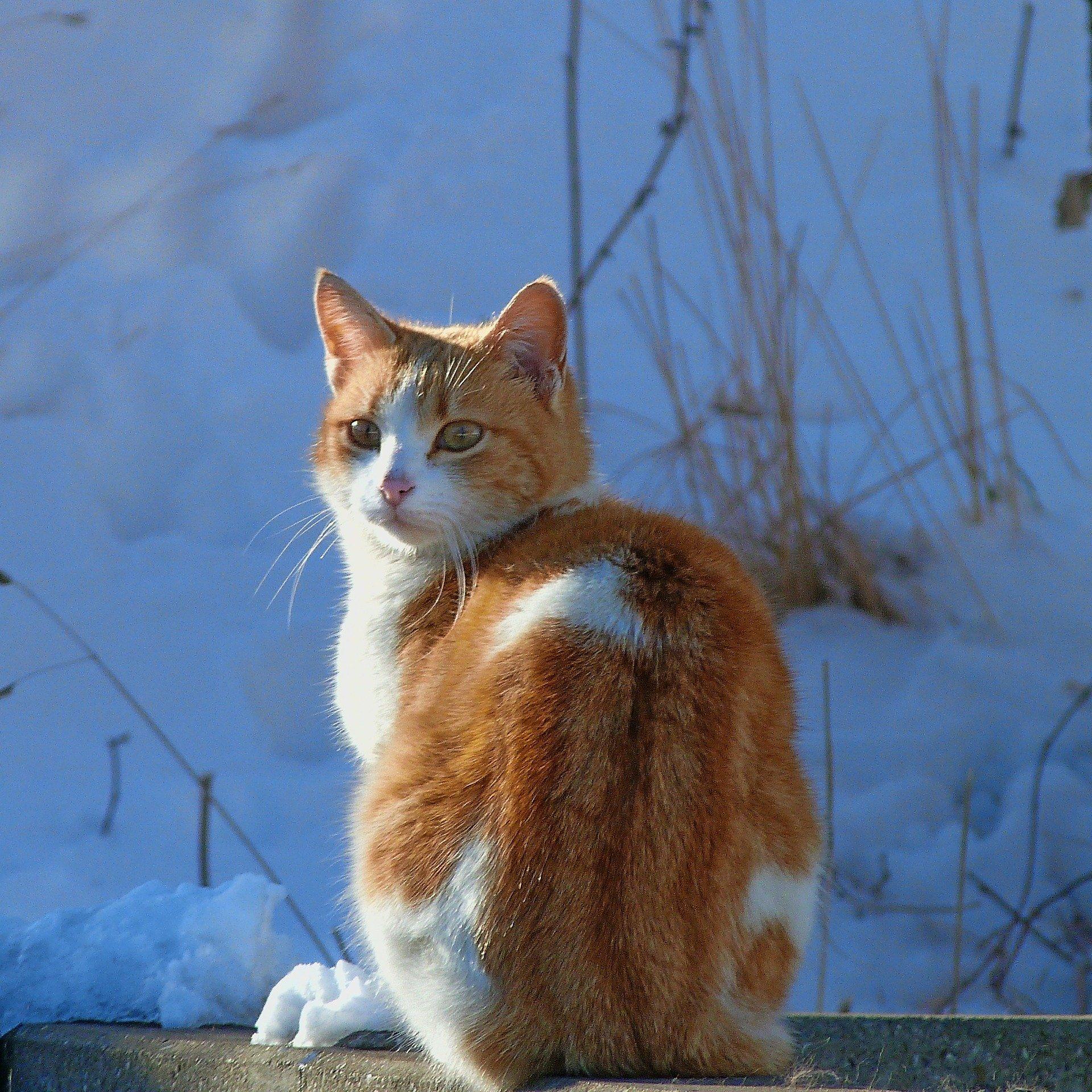 outdoor-cats-in-winter