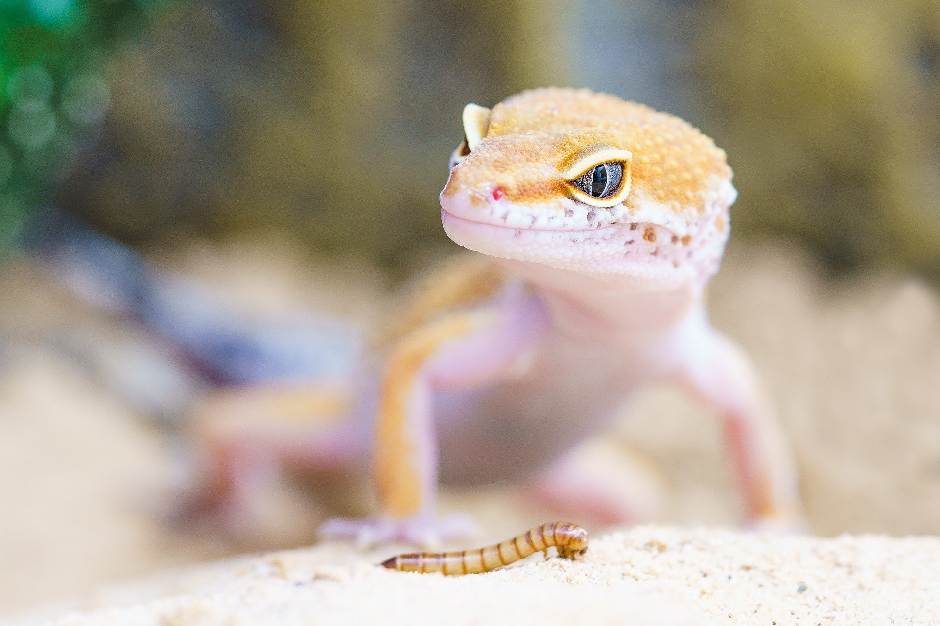 reptiles-make-good-first-pets