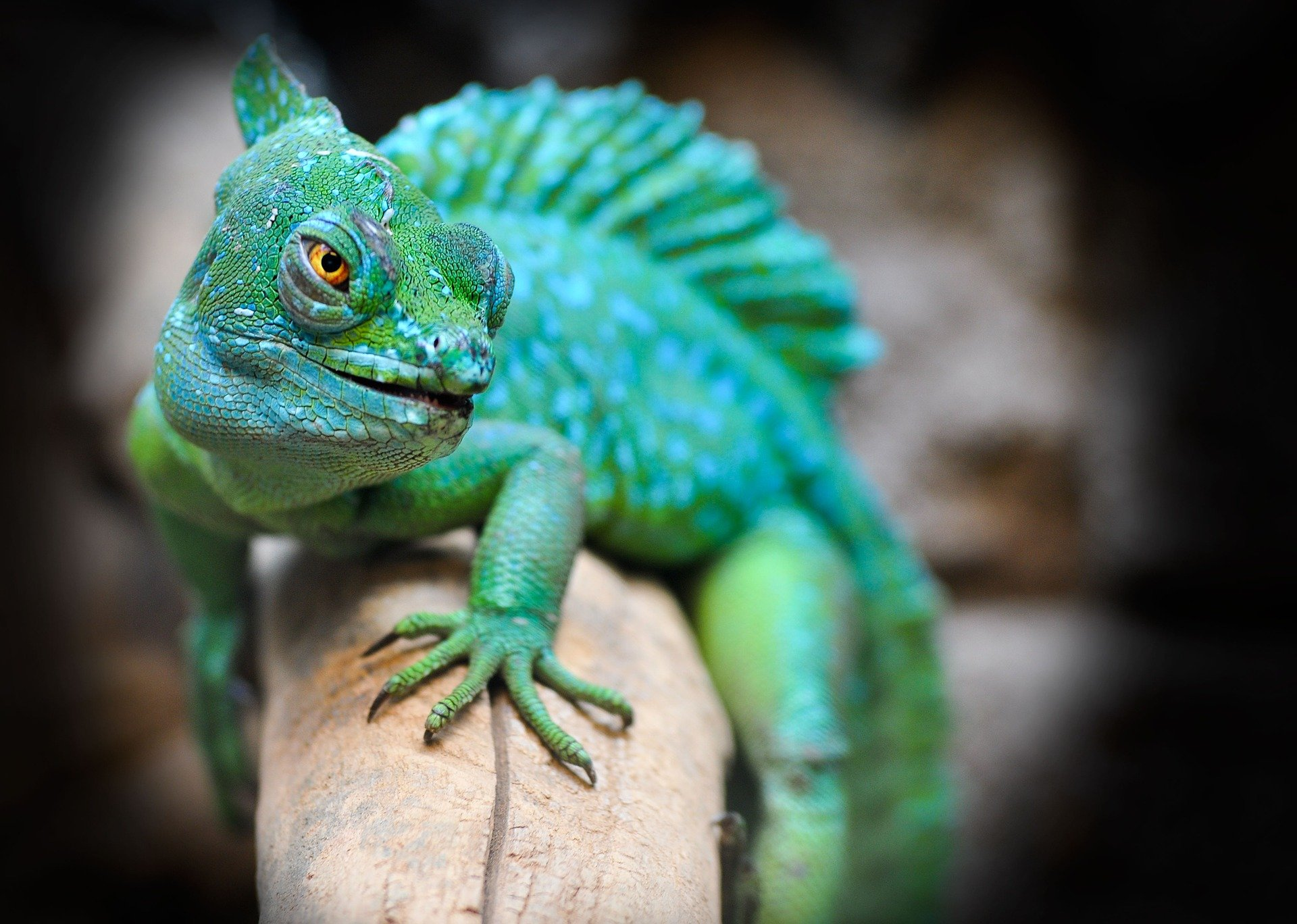 reptiles-make-great-first-pets